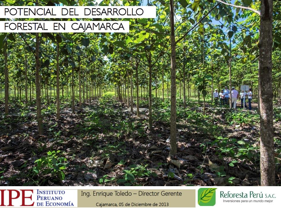 Potencial del desarrollo forestal de Cajamarca - Enrique Toledo