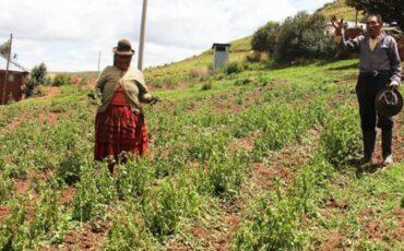 agropecuario, Cajamarca, economía, Perú