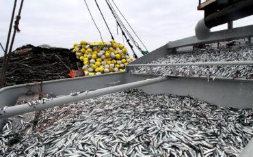 anchoveta, pesca, economía, Perú