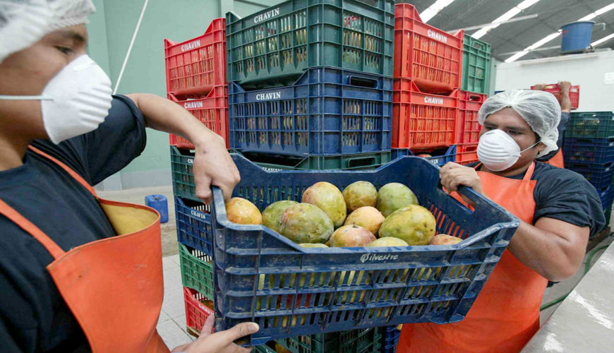 Piura, economía, regiones, mangos
