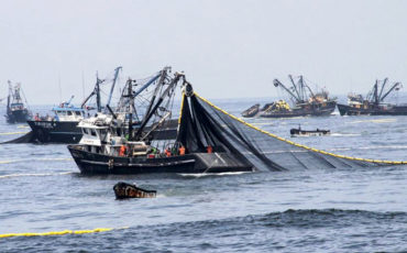 pesca, anchoveta, economía, perú, coronavirus