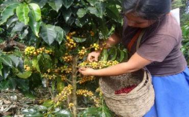 agropecuario, Piura, economía, Perú