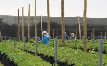agro, ley de promoción agraria, agroexportación